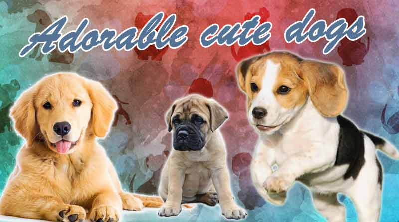 Adorable cute dogs in India