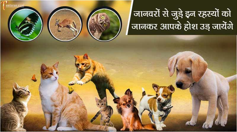 did you know facts about animals in hindi